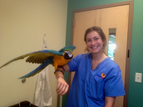 11.5 Week Old - Blue & Gold Macaw
